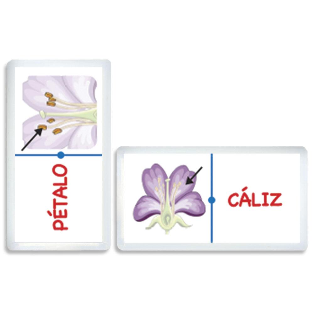 3388 Domino partes de la Flor