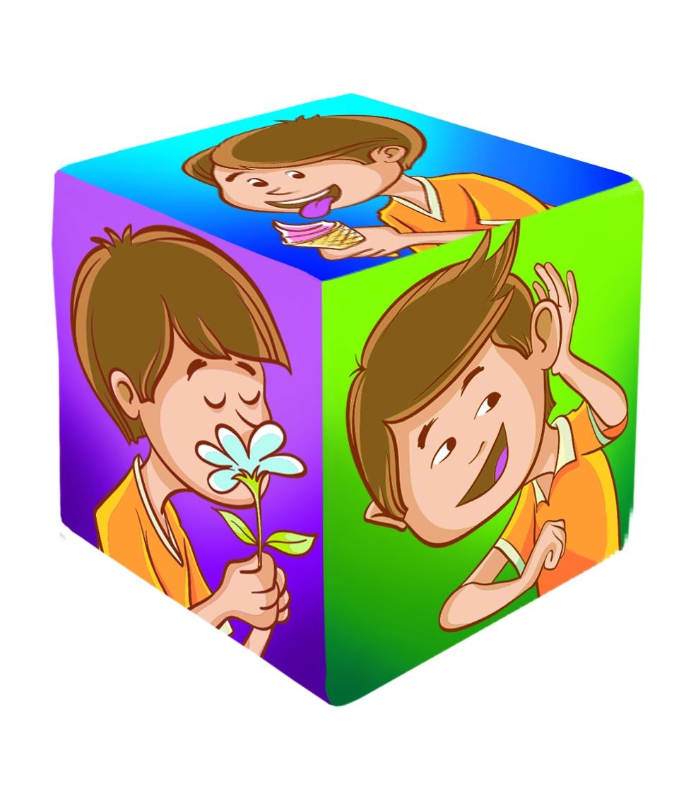 5031 cubo de sentidos