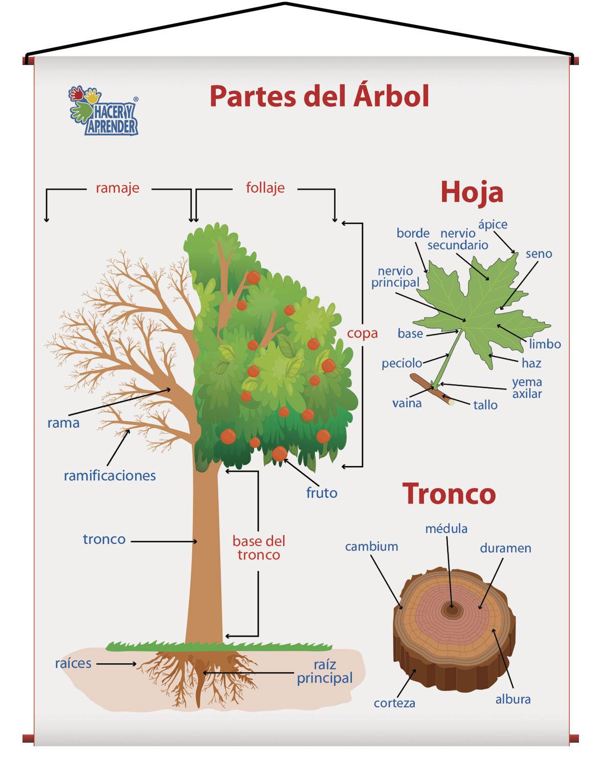 1726 PARTES DEL ARBOL