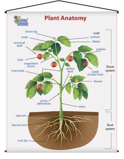 1710 PLANT ANATOMY