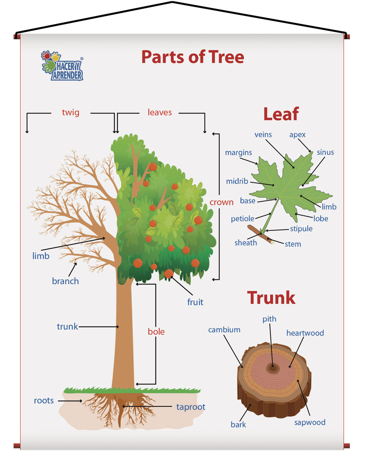 1729 PARTS OF THE TREE