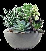 desk succulent plant.png