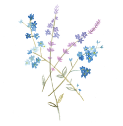 Blume 5.png