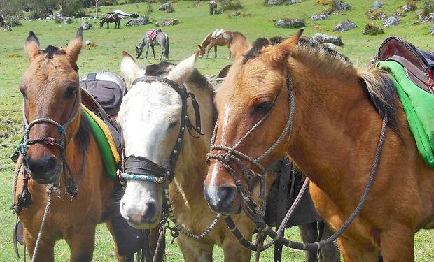 three horses copy.jpg
