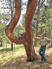 snake tree gz copy.jpg
