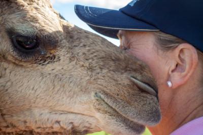"""Camel Cuddles"""