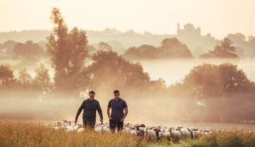 Sheep Milk Ireland