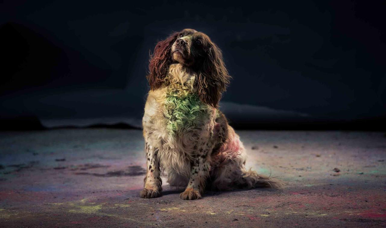 Colour Run SHoot - Denis Vahey Photography Commercial _ Portrait _ Advertising  (28 of 29)