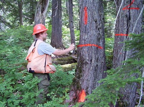 cosultant consulting the tree