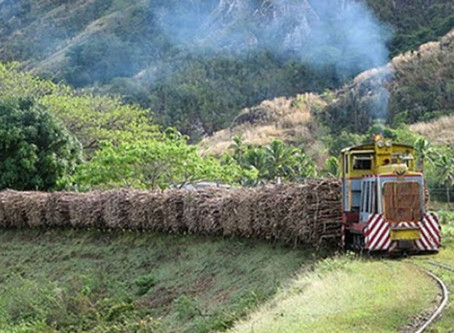 A kick in the guts of cane growers