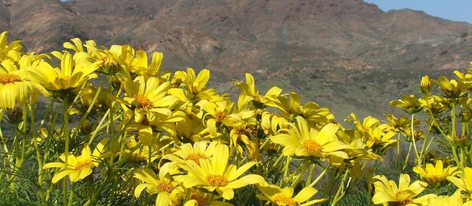 Fragrant Spring
