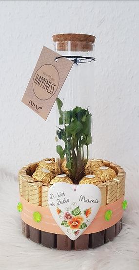 Schokoladengeschenk mit echter Grünpflanze