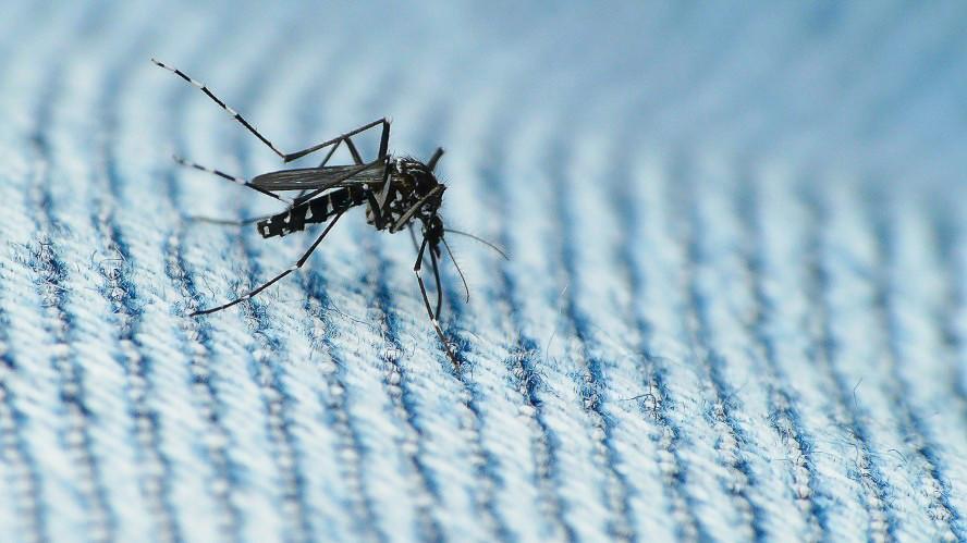 Mosquitos carrying the Zika virus are an increasing threat