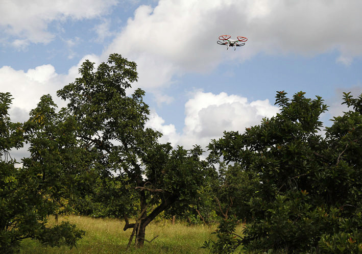 Drones help save avocado crops