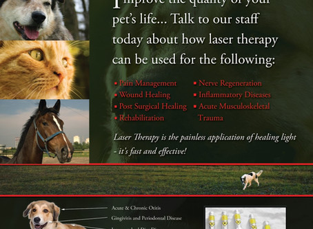 We now offer Laser Therapy!
