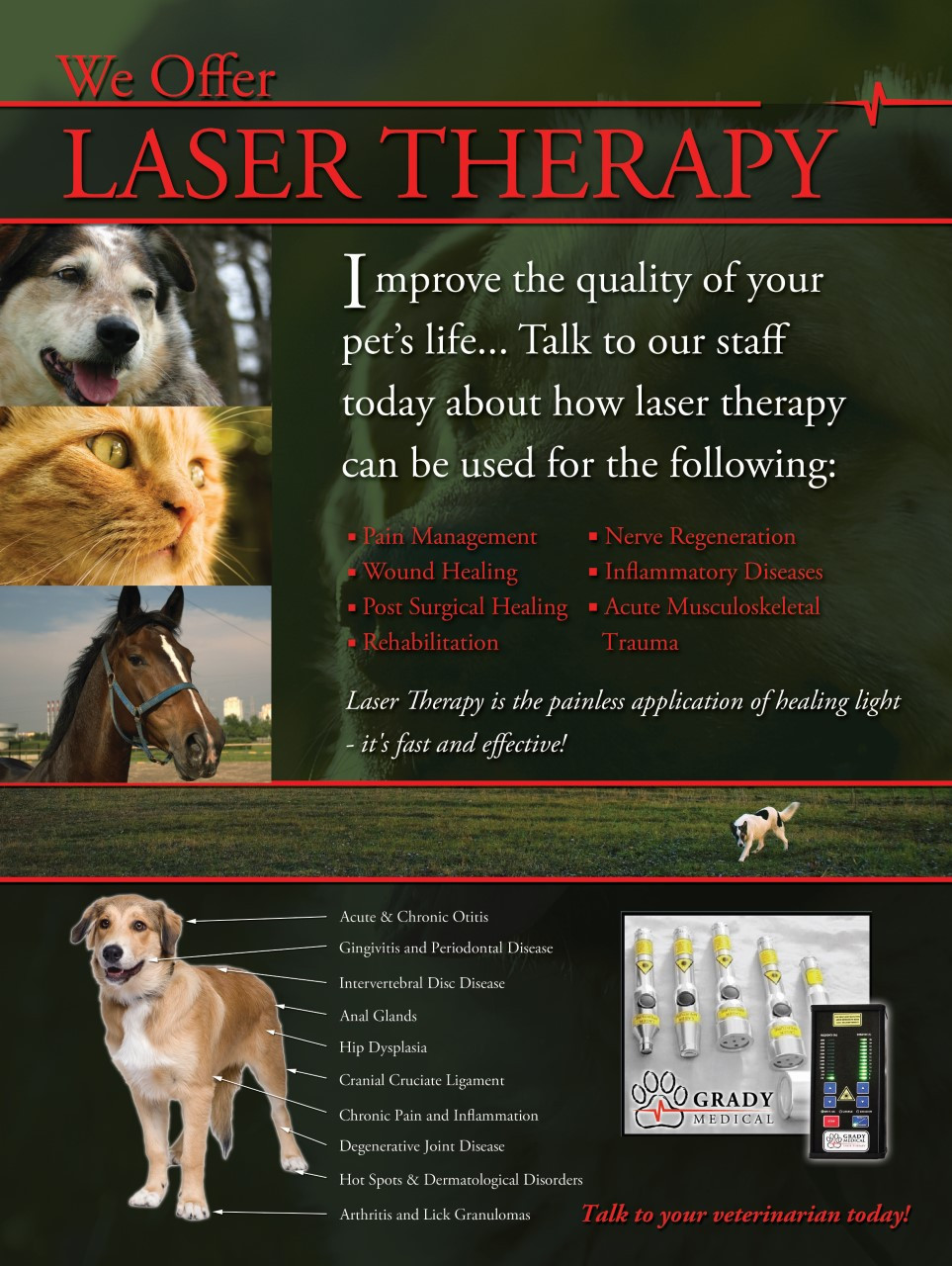 We offer laser therapy