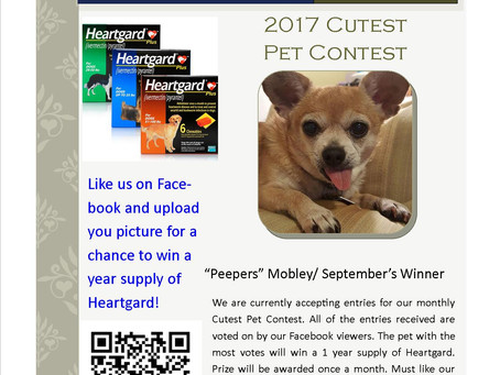 Cutest Pet Contest Winner September 2017. Post a picture for a chance to win a year supply of Heartg