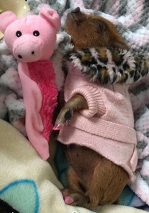 Cutest Pet Contest Winner for April 2018