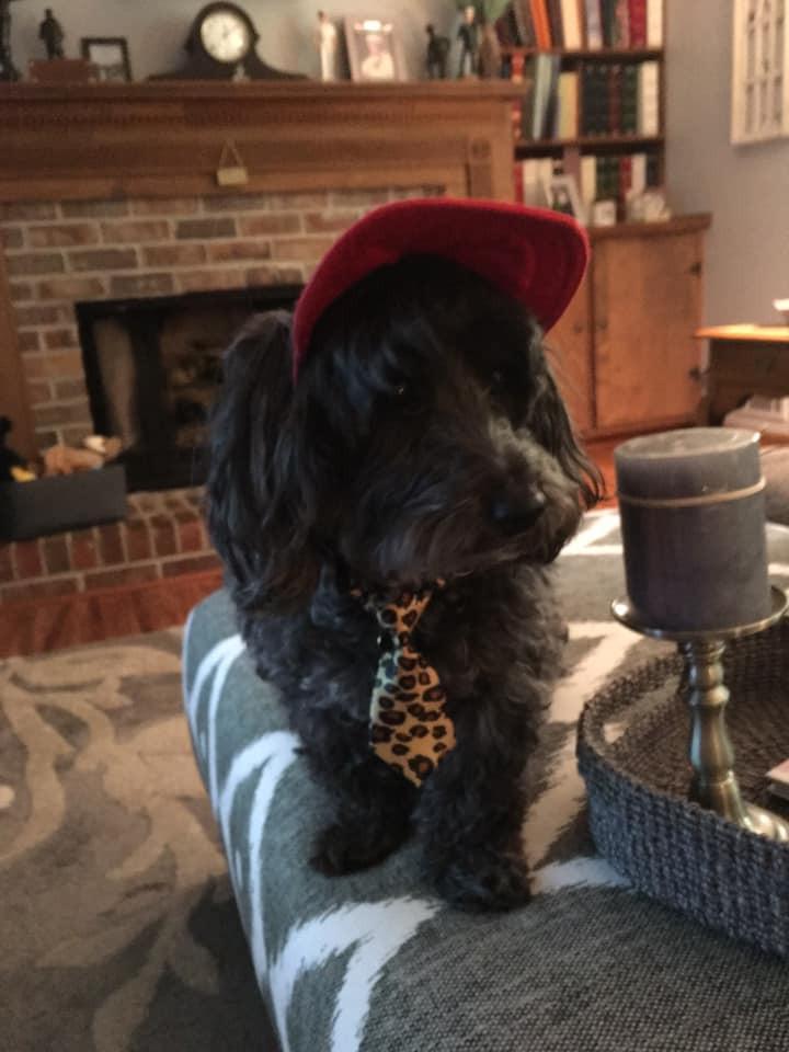 Cutest Pet Contest Winner April 2019