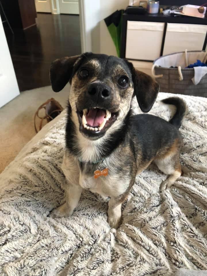 Cutest Pet Contest Winner August 2019