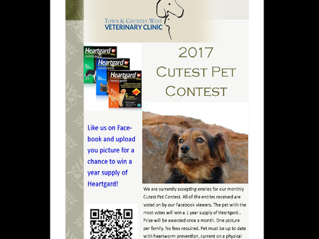 Enter our cutest pet contest and win!