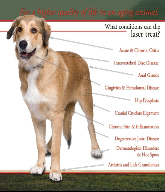 Most common conditions treatable with laser therapy
