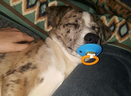 Post a picture for a chance to win a year supply of Heartgard! Meet the Cutest Pet Contest Winner fo