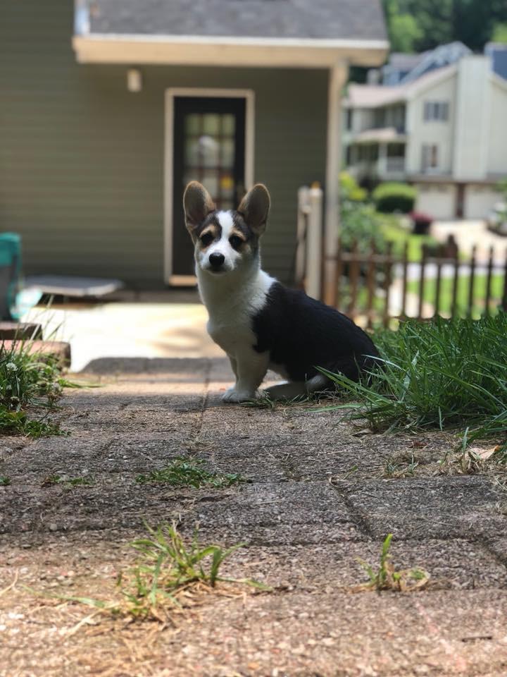 Cutest Pet Contest Winner June 2018