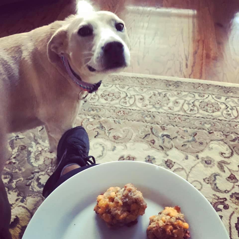 Cutest Pet Contest Winner November 2019