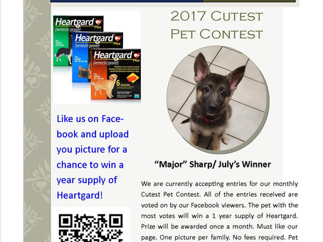 Cutest Pet Contest Winner August 2017. Post a picture for a chance to win a year supply of Heartgard