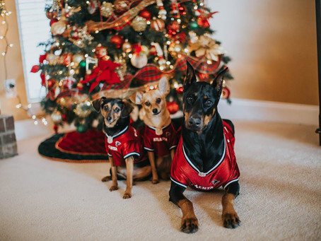 Cutest Pet Contest Winner December 2017! Post a picture for a chance to win a year supply of Heartga