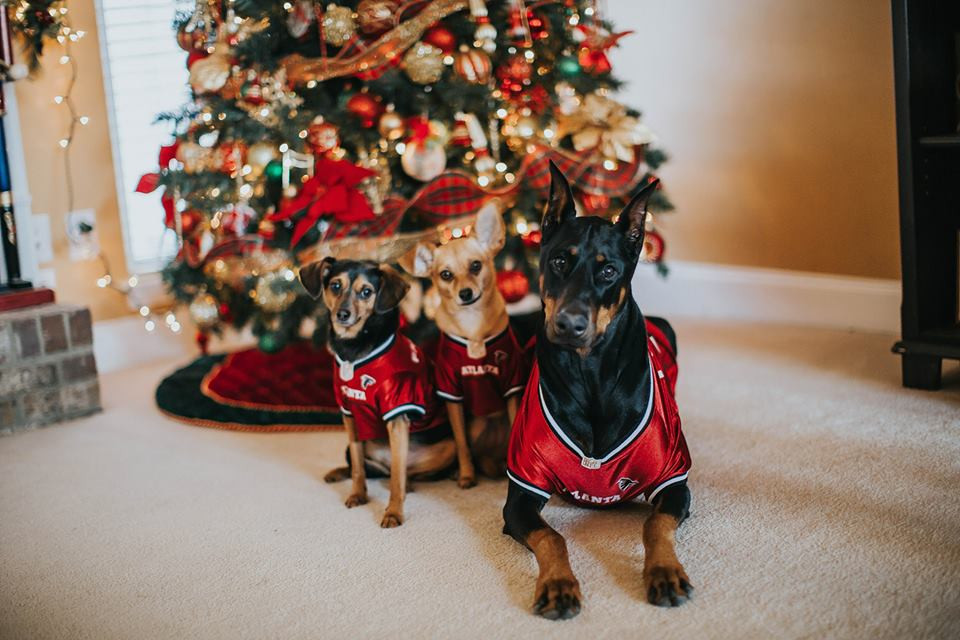 Cutest Pet Contest December 2017