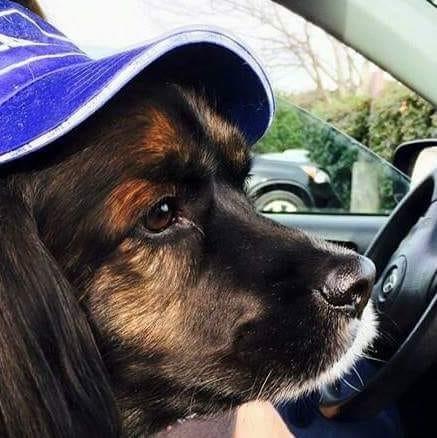 Cutest Pet Contest Winner October 2018