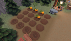 Crops for planting