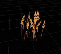 Wheat cluster