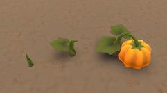 Pumpkin growing states