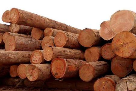 Gabon: Un Fond pour développer les entreprises de bois de la ZES de Nkok