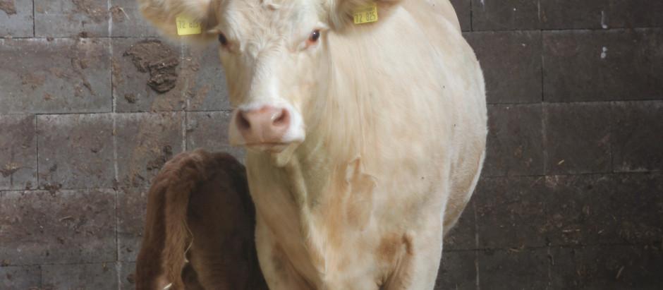 Interessanter Beitrag zum Thema Milchexporte