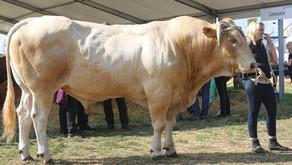 Ausläufe für Milchvieh und Mastrinder