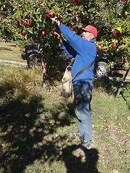A & L Peterson Orchards apple picker