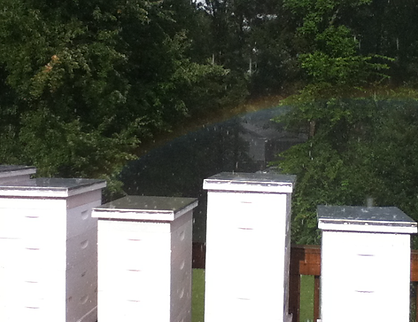 Rainbow over hives