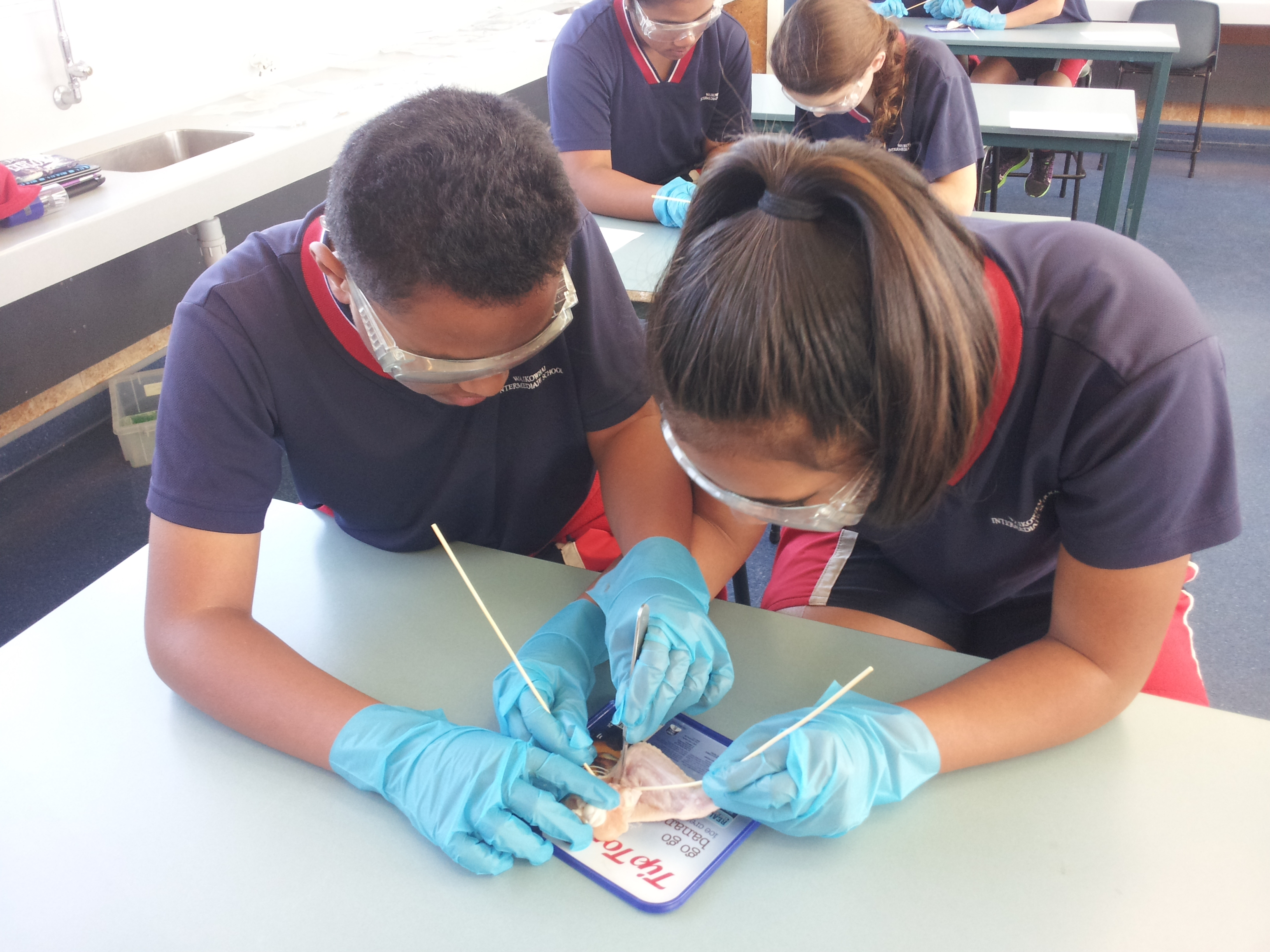 Dissecting for discovery
