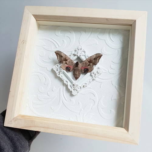Tarantula Soph Taxidermy and Wet Specimens | Shop