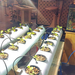 It's Hydroponics day TOMORROW. Come see us at 10AM on Tuesday to learn how to grow plants using this