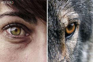 Человек человеку волк?