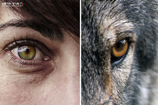 אדם לאדם זאב?