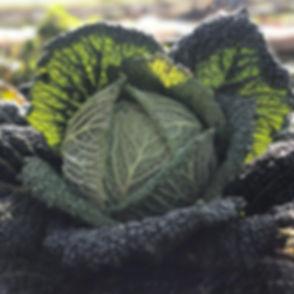 🥬 Chou frisé 🥬 #chou #cabbage #marketg