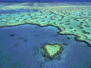 Dzień siódmy - Rejs Do Serca Rafy Koralowej.
