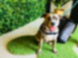 Gold Coast, Pet Shop, Pet Store, Miami, Wholefood Pet Market, Raw 4 Paws, Complete Pet Company, Whoa Nelly, Proudi, Raw Feeders' Kitchen