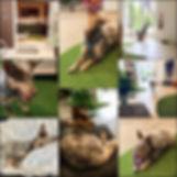 Pet Shop, Gold Coast, Wholefood Pet Market, Raw Dog Food, Miami